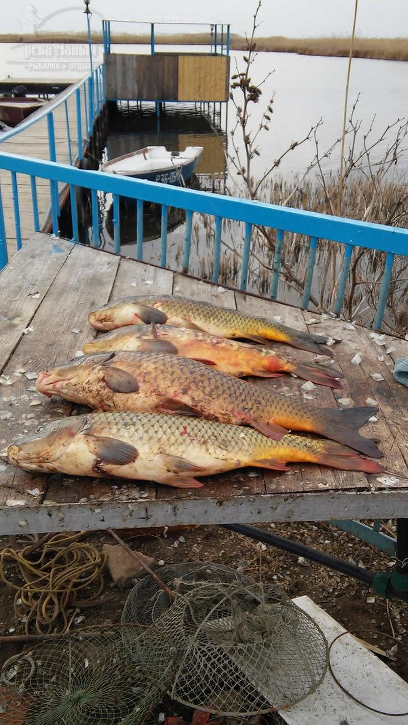 Рыболовные базы на маныче ростовская