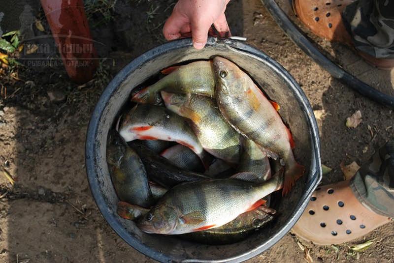 Магазин товаров для рыбалки